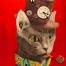 B.Madalena - Sir Cat